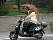 Собака-Компаньен