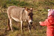 Фото с карликовым пони или осликом - фотосессия на нашем хозяйстве