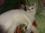 белый котик с документами