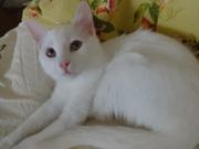 белый котик као мани с документами