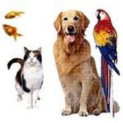 Зоомагазин недорого корм для собак